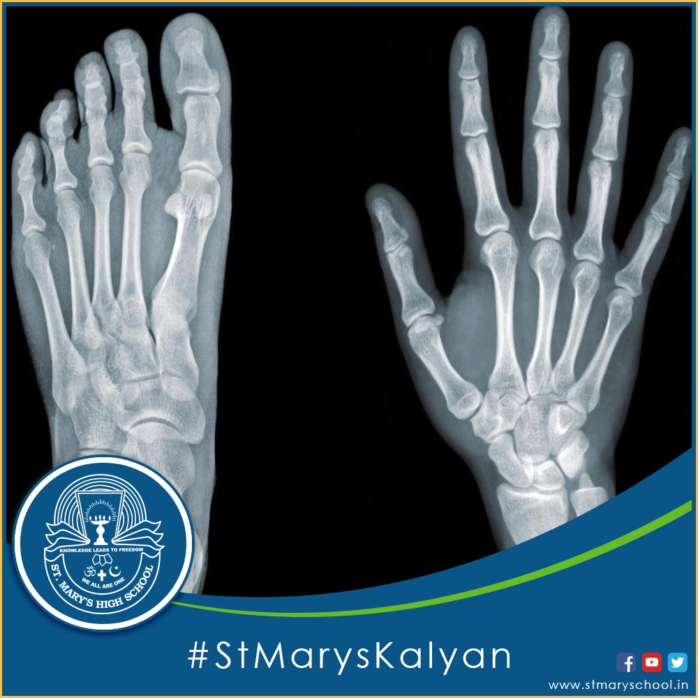 St Marys School On Twitter Didyouknow The Bones In Our Hands