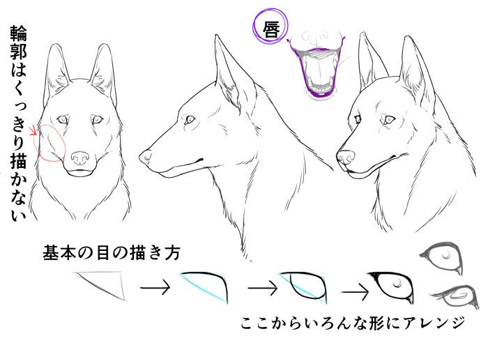 いちあっぷ Twitterren リアルな犬を描く時にも獣人を描く時にも