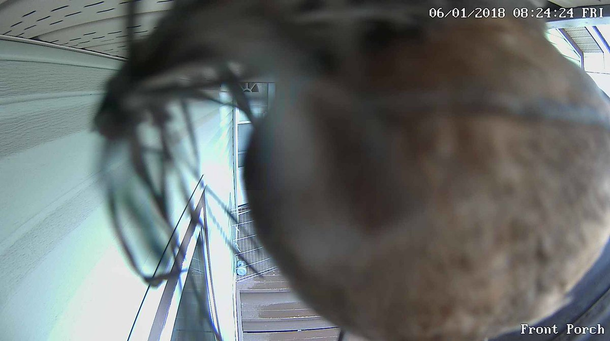 entretien destruction camera surveillance enlever insecte objectif répulsif