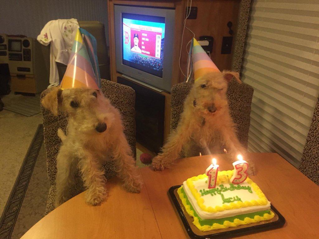 Petco On Twitter Happy Birthday Lucy