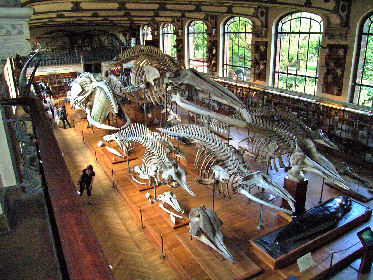Sven Sachs On Twitter Collection Of Whale Skeletons Comparative