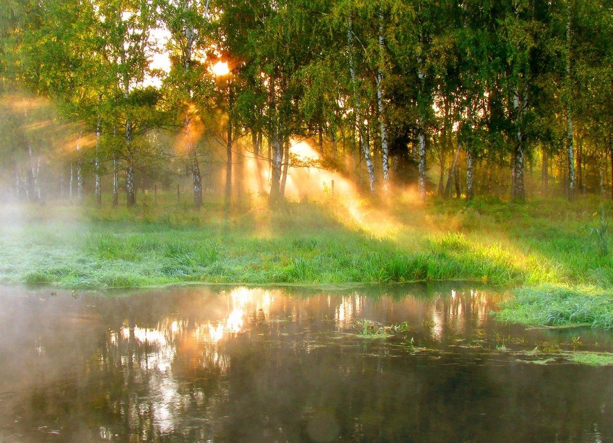 картинка летний дождь утро объясняют это тем