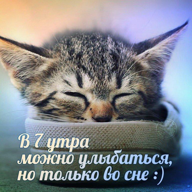 Картинки с прикольными надписями смешными с добрым, котики смотреть