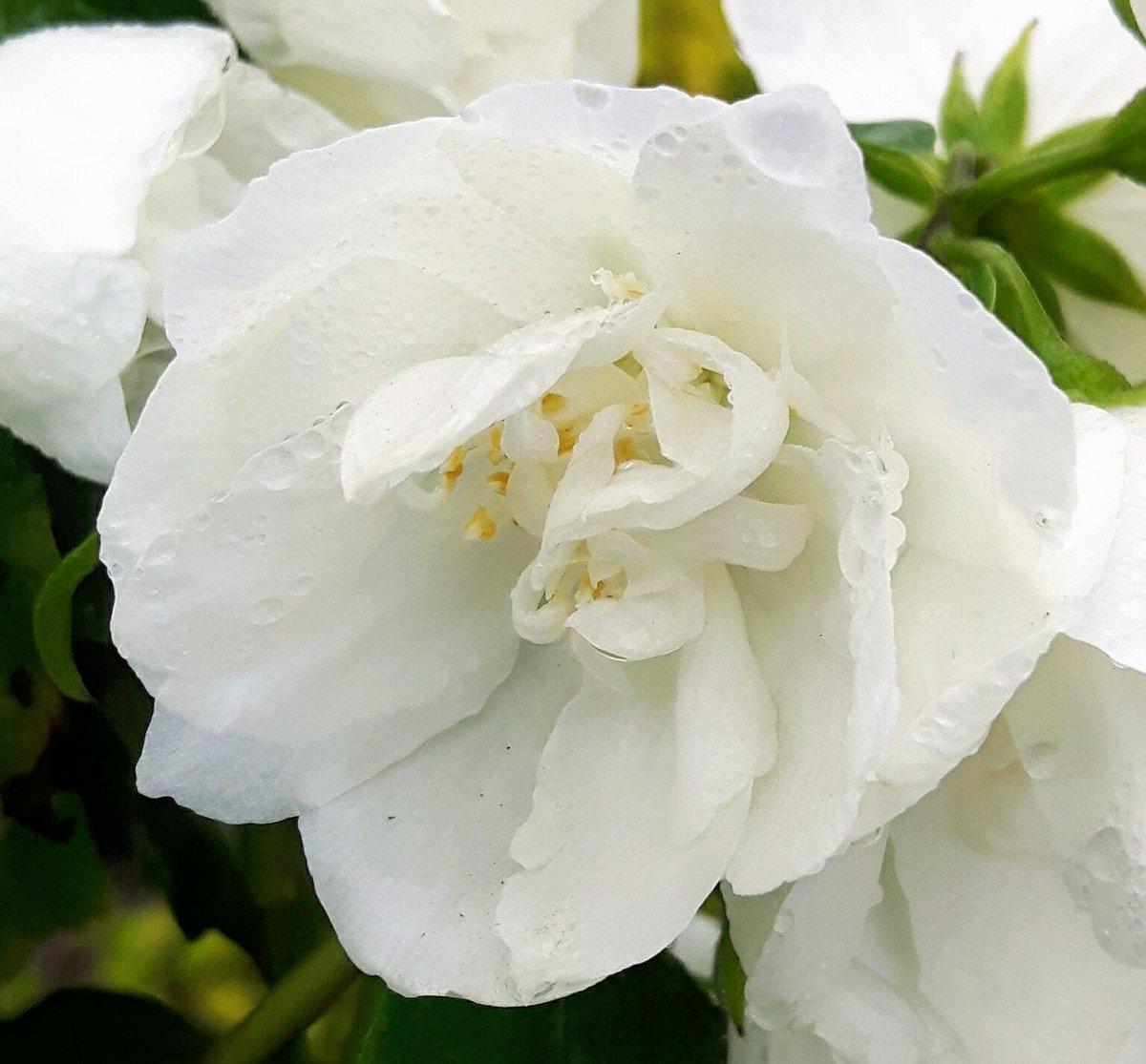 Jajones Cash Carry On Twitter Summer Flowering Shrubs Here