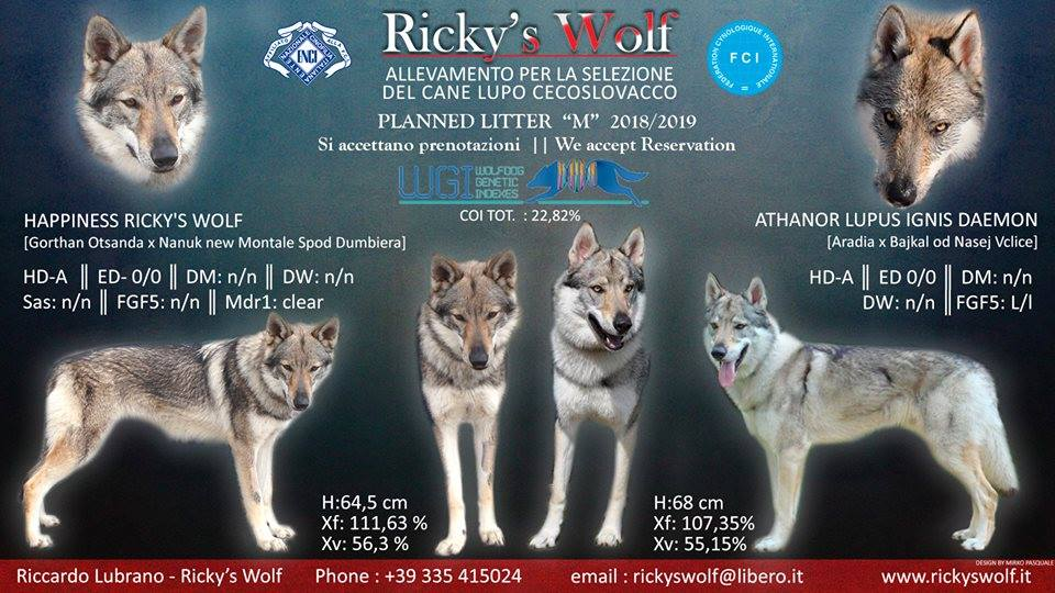 Riccardo Lubrano Rw On Twitter Planned Next Litter 201819 In