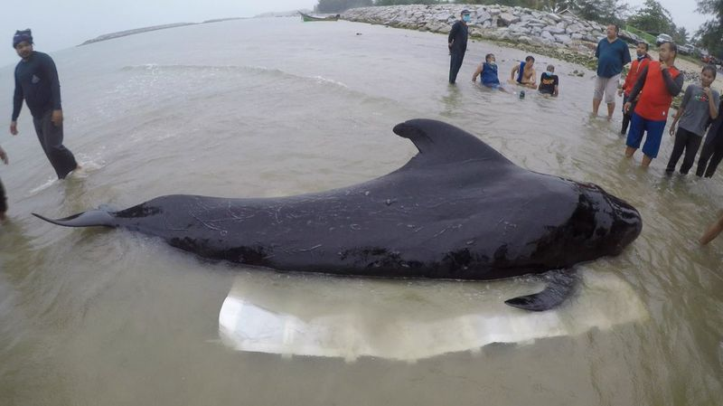 Whale dies after eating 80 plastic bags. #9News https://t.co/nacfINkTKl