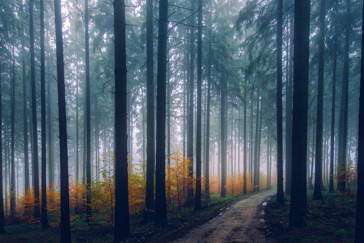Get Hd Nature Wallpapers On Twitter Away Trees In The Forest Hd