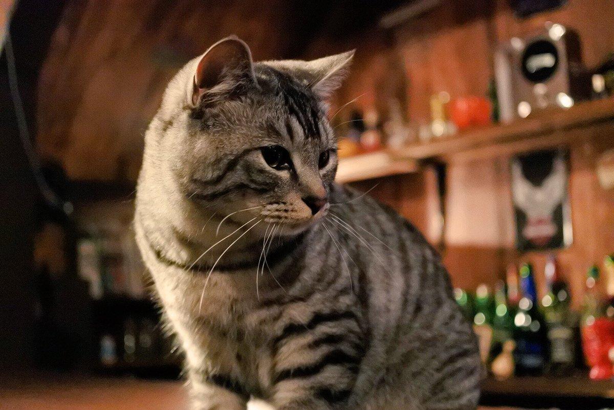 猫とお酒が飲める?!w飲まれるんじゃないかとちょっと心配になるバーがステキw
