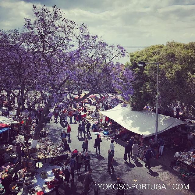 test ツイッターメディア - 昨日の泥棒市とジャカランダ。 #リスボン #ポルトガル #ジャカランダ https://t.co/l5uFrjN5d3