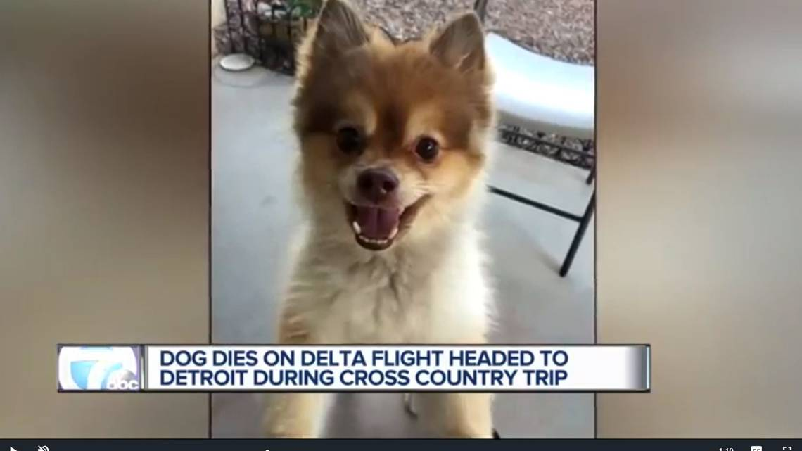 Dog dies while on a Delta layover. Owner alleges 'there's some kind of foul play' https://t.co/JqrQoyTv0O