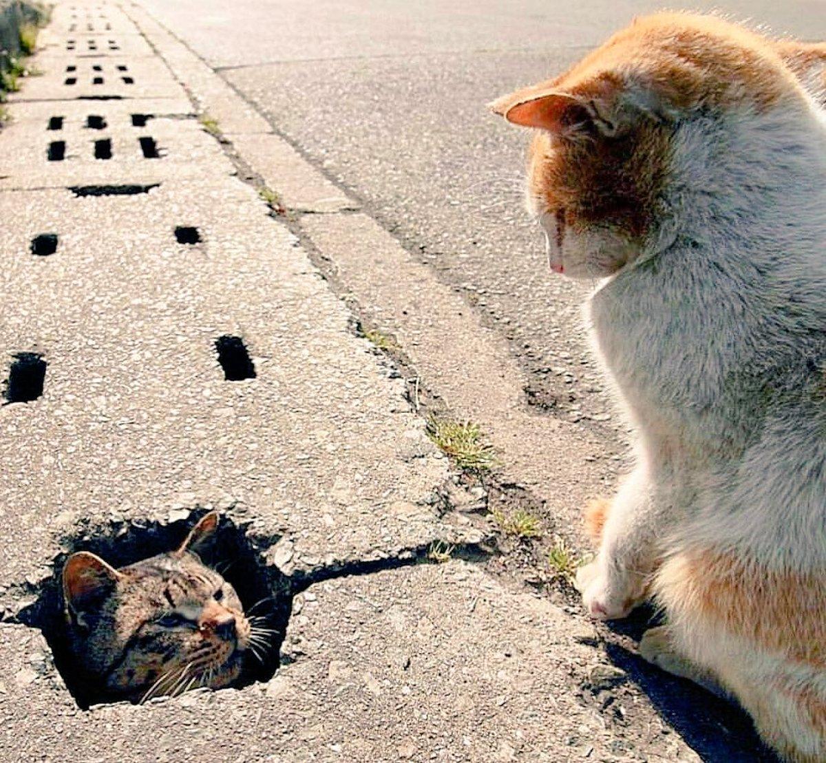 الوسم #minecraftcat على تويتر