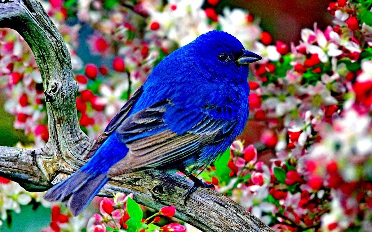 "Nature%20Photography%20on%20Twitter:%20""Beatiful%20blue%20bird%20#beautiful%20#travel%20%20#nature%20#birds%20#bird%20#amazing%20#Art%20#animals%20#love%20#USA%20#Wildlife%20#world%20%20#PHOTOGRAPHY%20#picture%20#pictures%20https://t.co/TwGLJQEudt"""