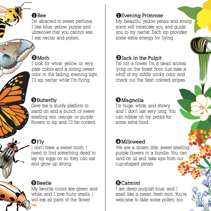 Chicago botanic garden on twitter its national pollinatorweek we have lots of resources to learn about pollinators on our web site including this pollinator match up game see link for more details mightylinksfo