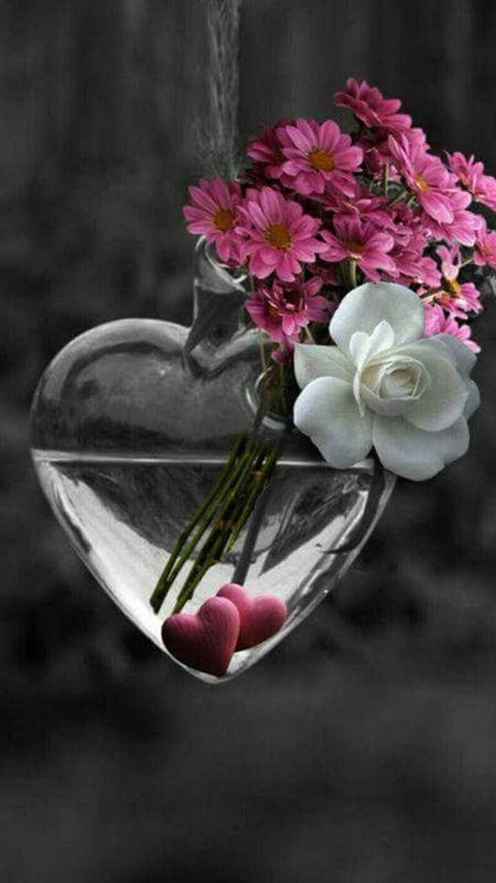цветы со смыслом фото только талантливый фотограф