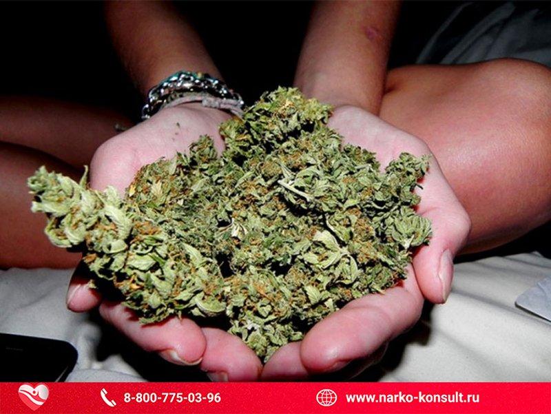 Если часто курить марихуану сколько хранятся семена конопли