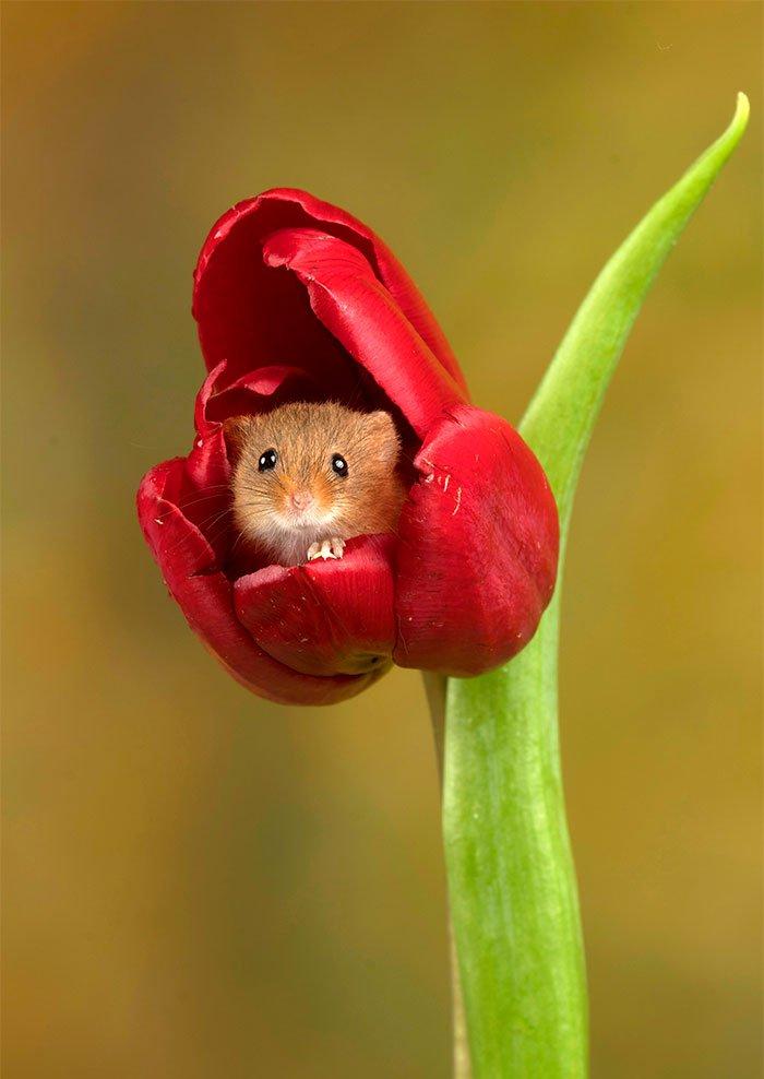 Ждем тюльпаны прикольные картинки