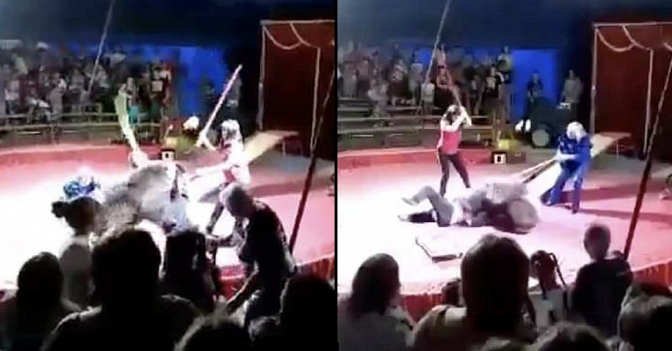 Bear that's whipped and forced to ride skateboard viciously attacks circus handler. ladbible.com/news/animals-r…
