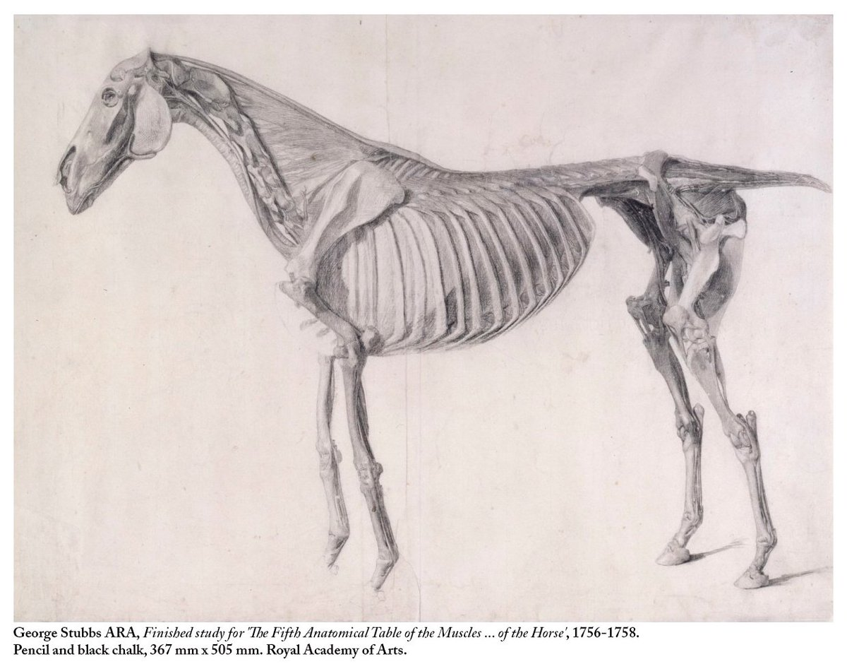 Royal Academy On Twitter A Selection Of Drawings By George Stubbs