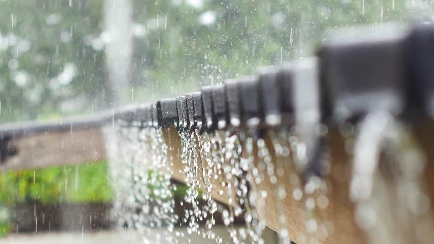 растения фото дождь по крыше дубовая