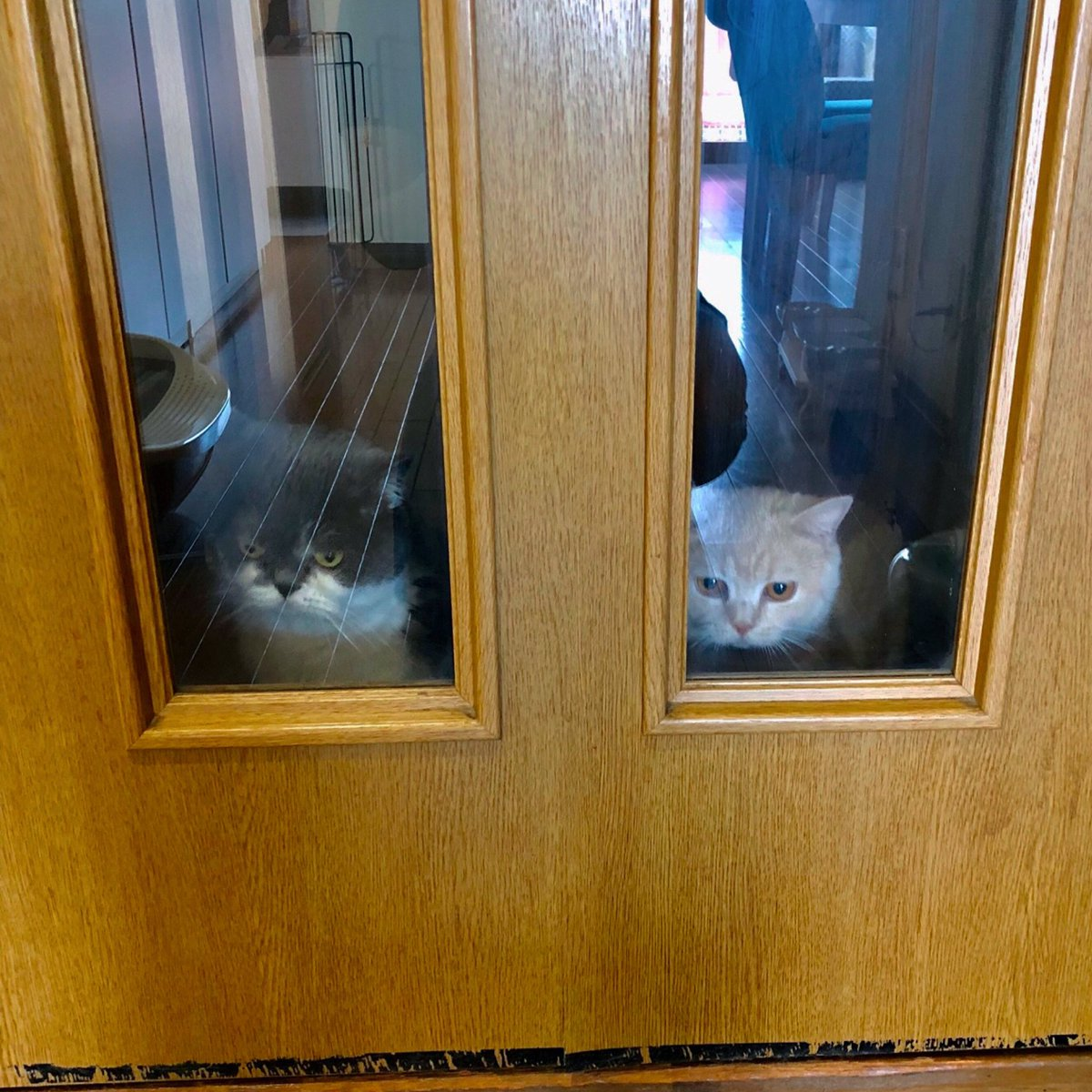 廊下にふたりが居ることを知らずに締め出してしまってから1時間後の顔...