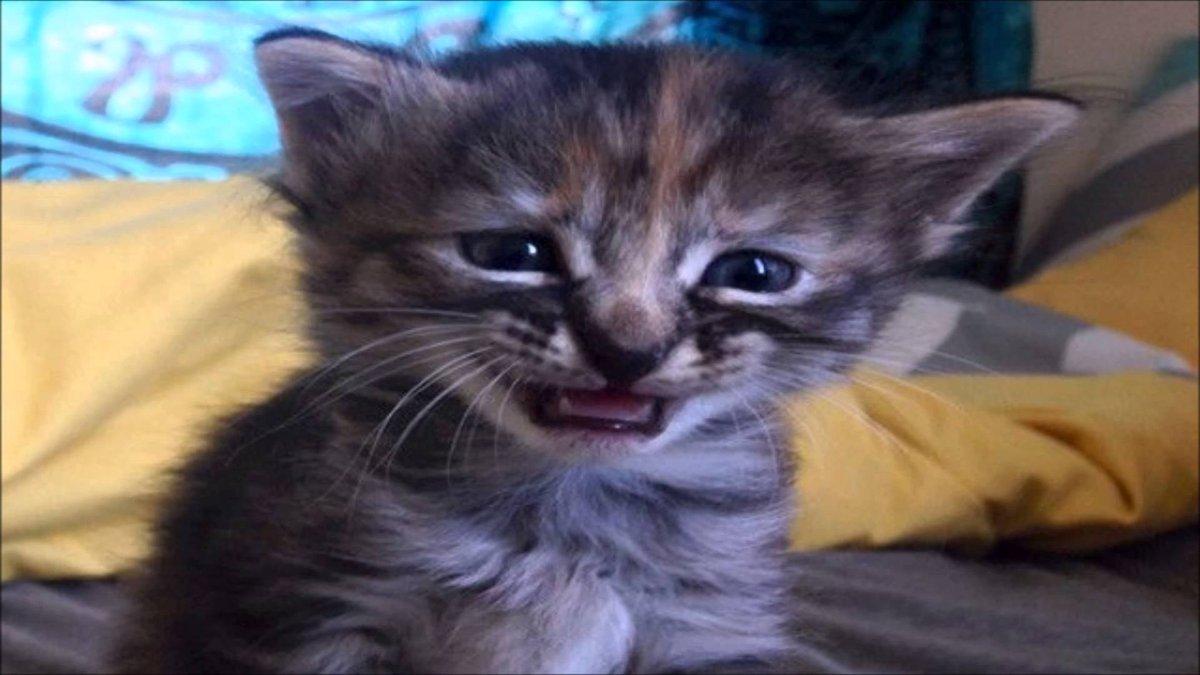 Плачущий кот смешные картинки