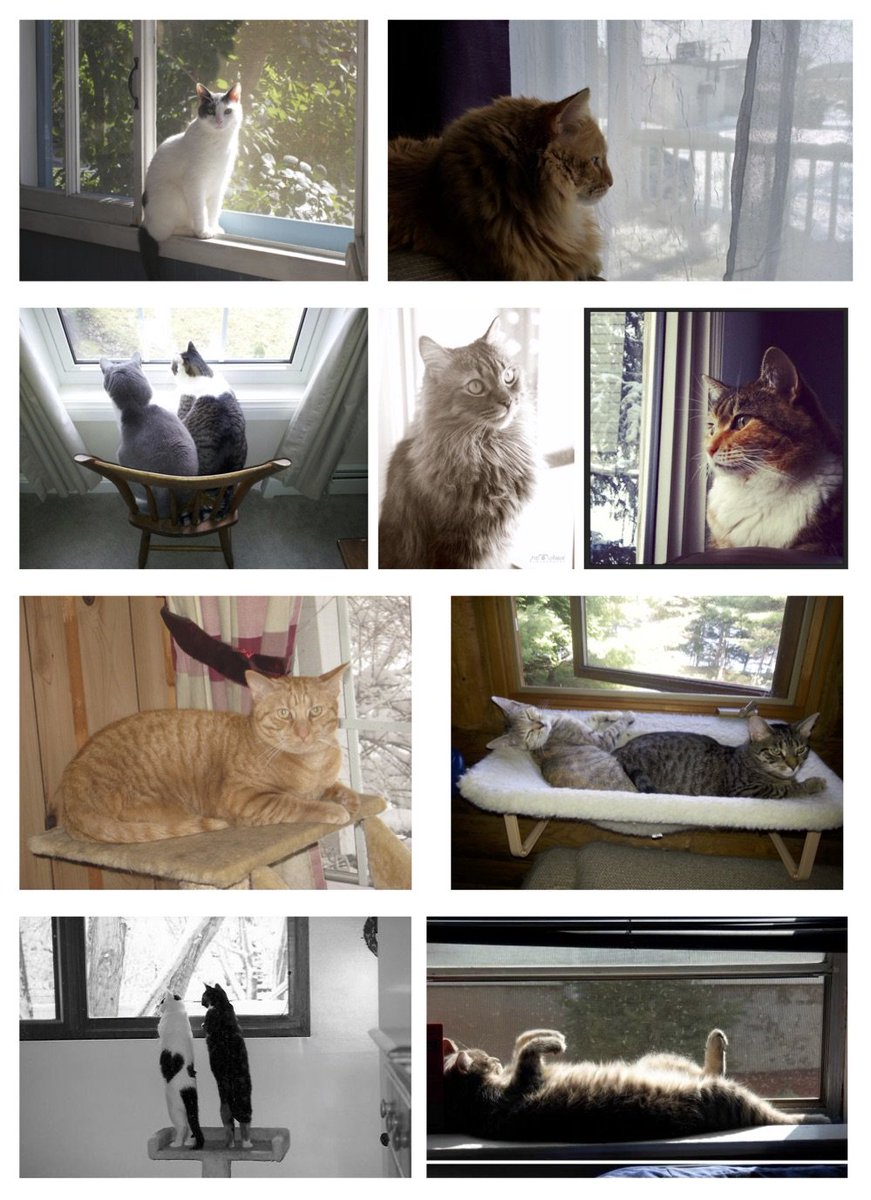 Cats And Birds On Twitter Cat Tv Create A Window Perch