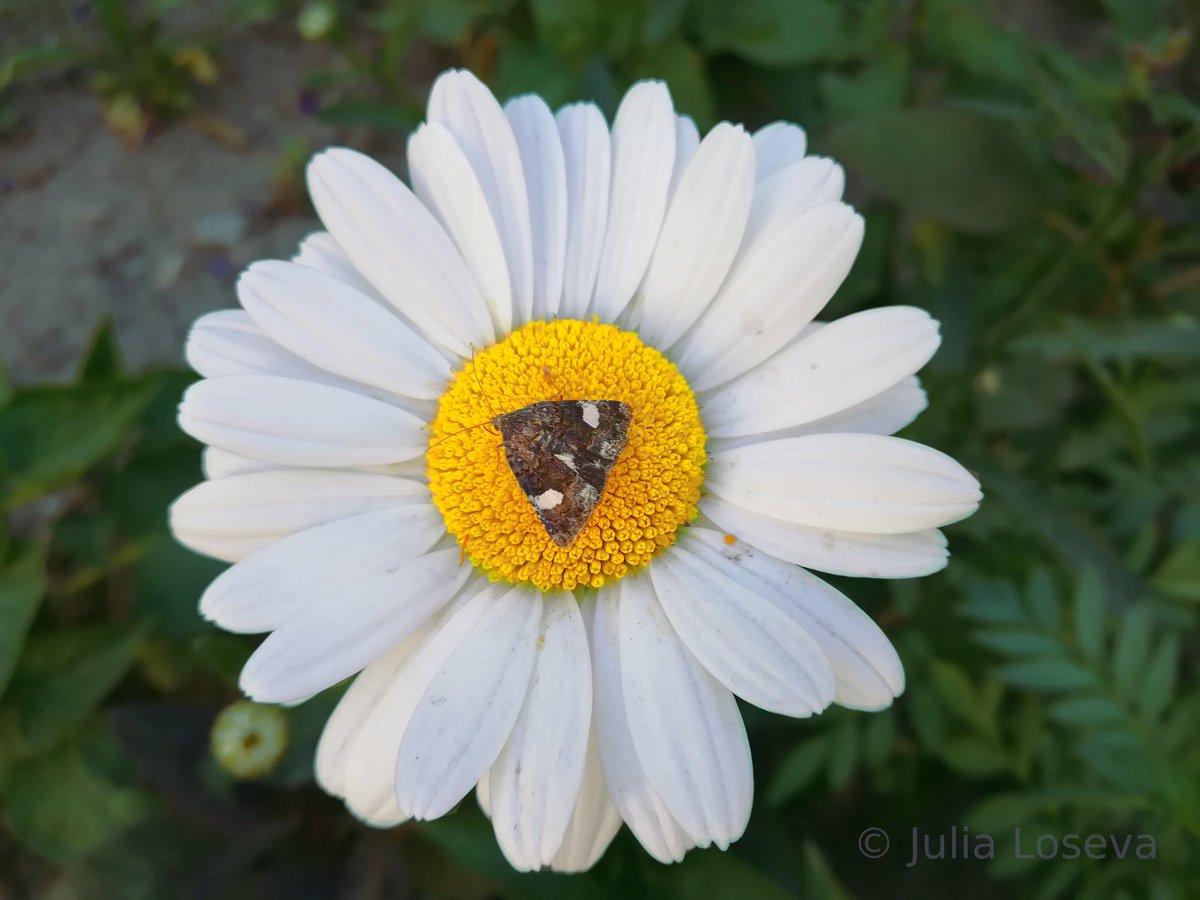 Julia Loseva On Twitter Summer Summerjam Summertreats White