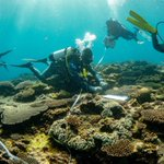 Image for the Tweet beginning: Ningaloo Reef: Researchers find low