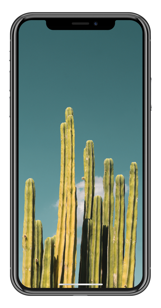 Ideviceart On Twitter Cacti S Dailywalls Wallpaper Iphonex