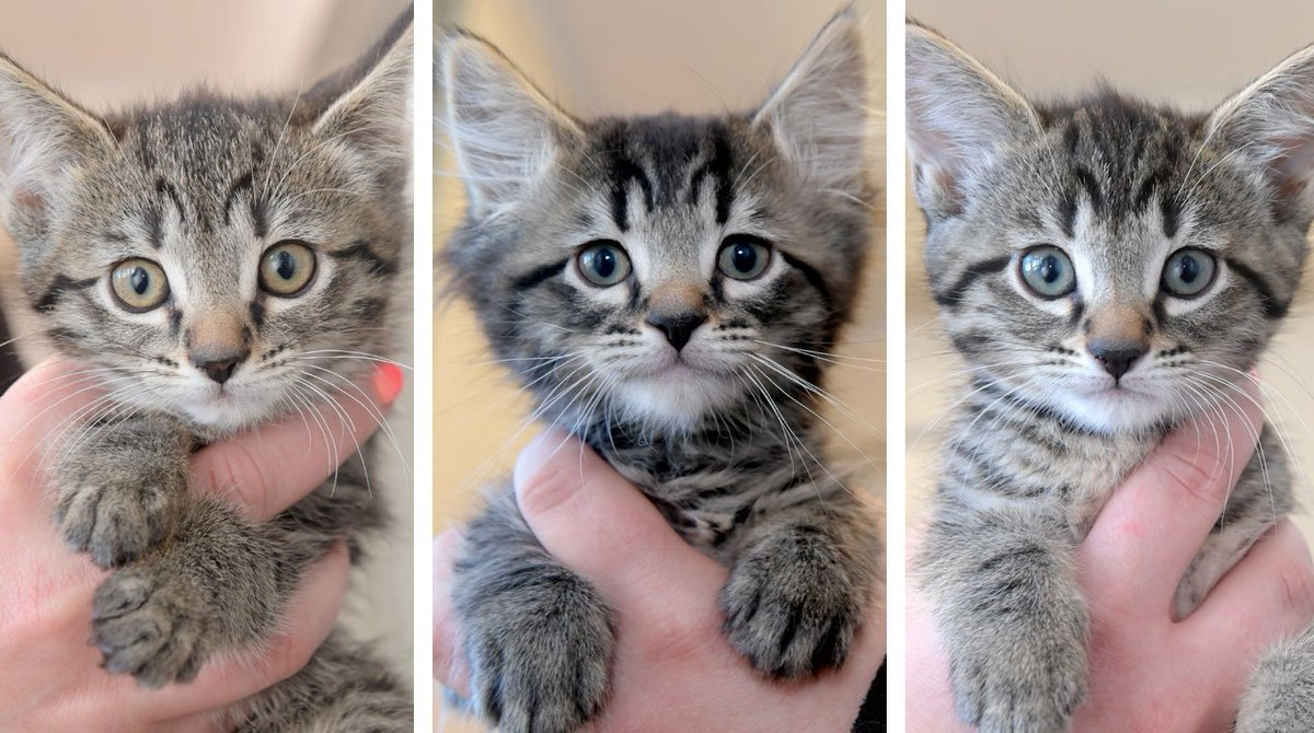 Watch: Could you help rehome any of these beautiful kittens?  https://t.co/VzMJzUIzV8