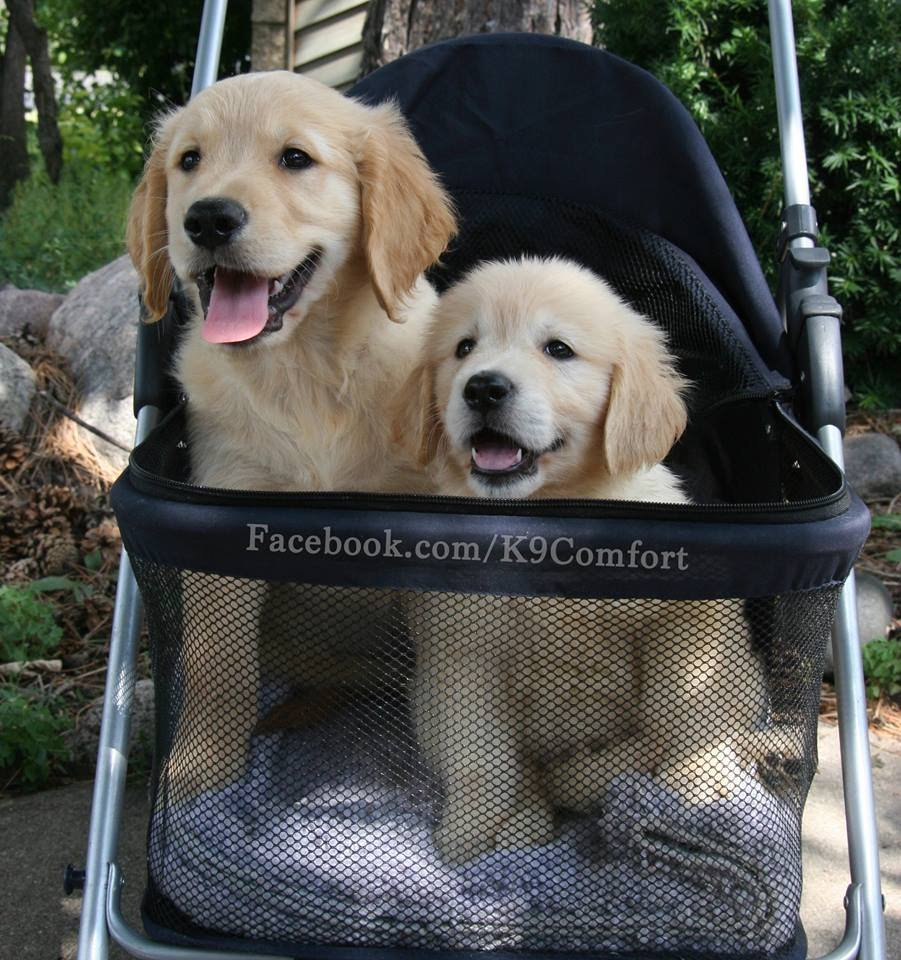 Lcc K9 Comfort Dogs على تويتر Puppies In Strollers