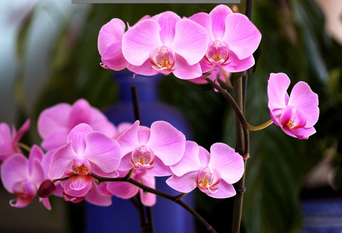 Картинка с цветком орхидея