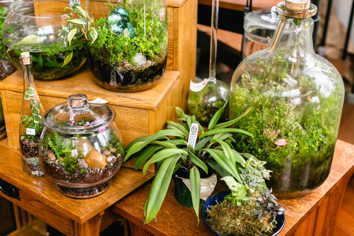 Roosevelt S Terrariums On Twitter Our 2 For 1 Spring Sale Ends