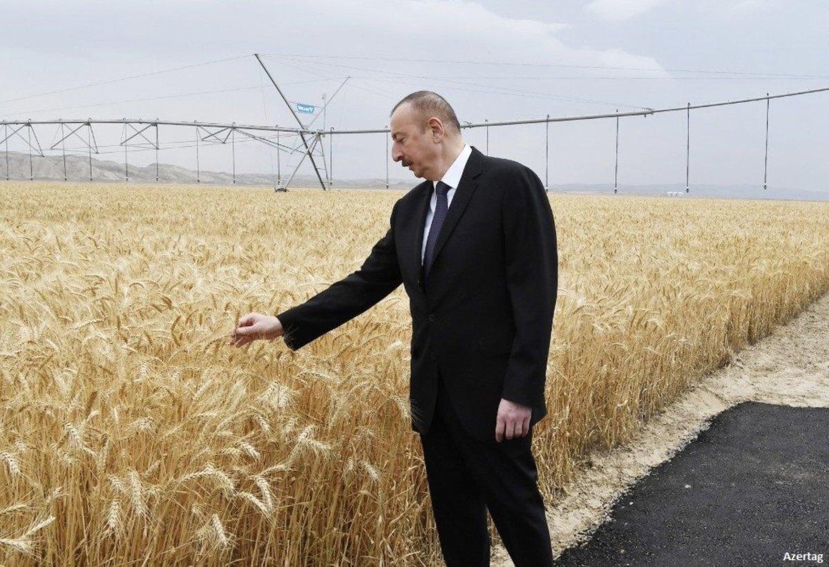 Фото президента Азербайджана в полях вызвало волну насмешек