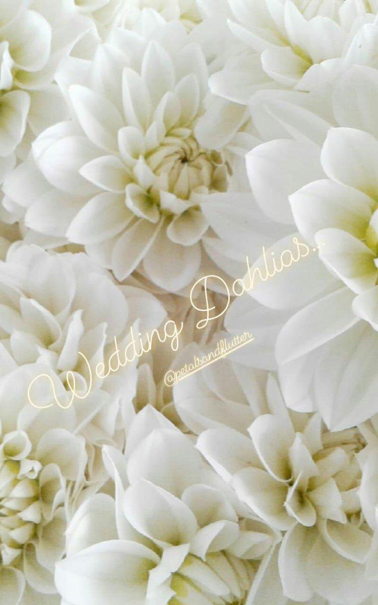 Petals And Flutter On Twitter White Wedding Choose Dahlias