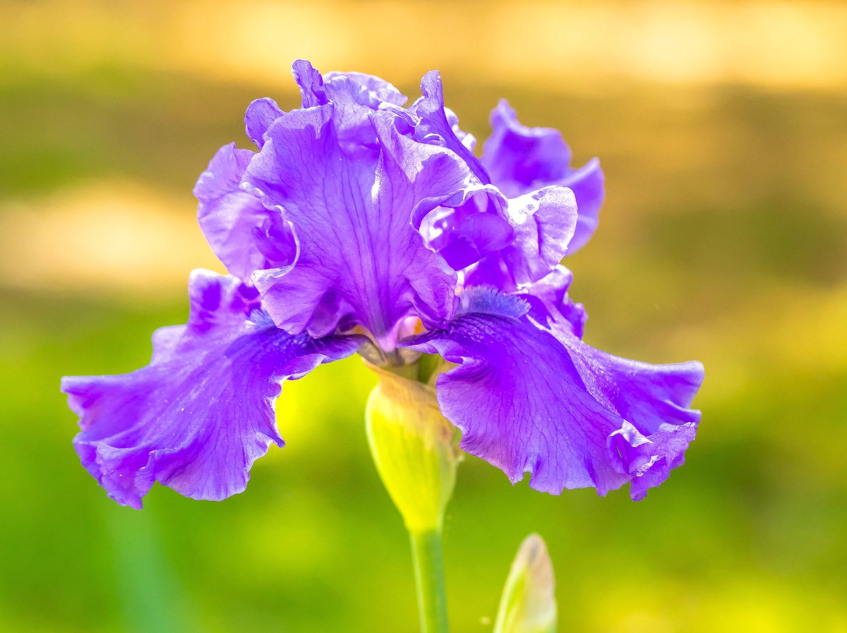 Lewis Ginter Garden On Twitter Did You Know That Iris Takes Its