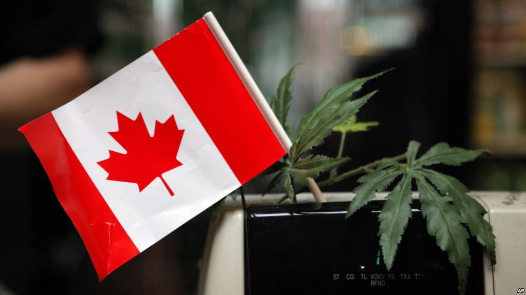 test Twitter Media - Canadá se prepara para venta legal de marihuana https://t.co/SakBeE6k0A https://t.co/FJTRsxtvGY
