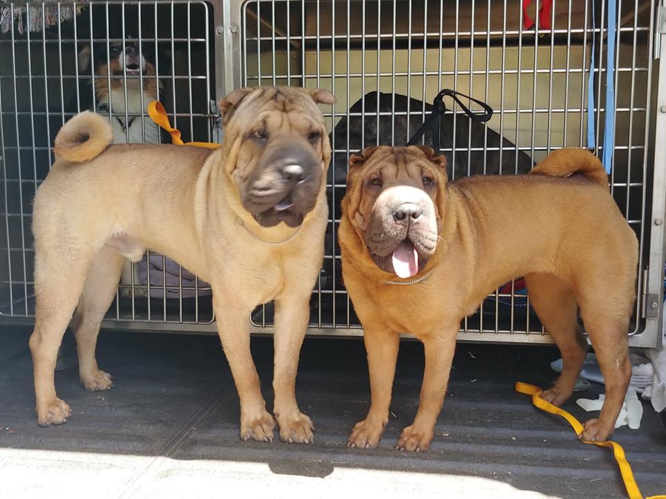 van dogs stolen Wednesday Redding driver Seattle dog trainer