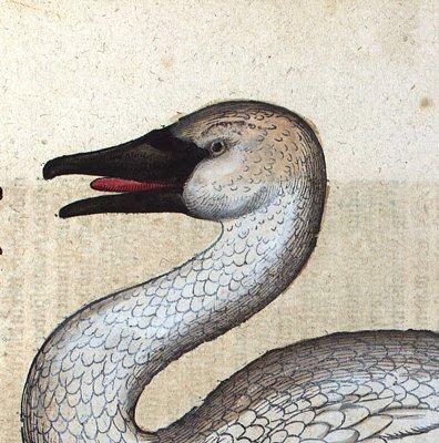白鳥 慶應