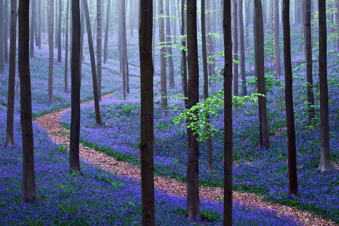 "World Tourism 🌎 on Twitter: ""The Magical Hallerbos Forest In ..."