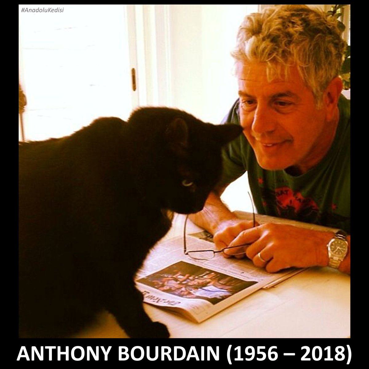 Image result for anthony bourdain cats