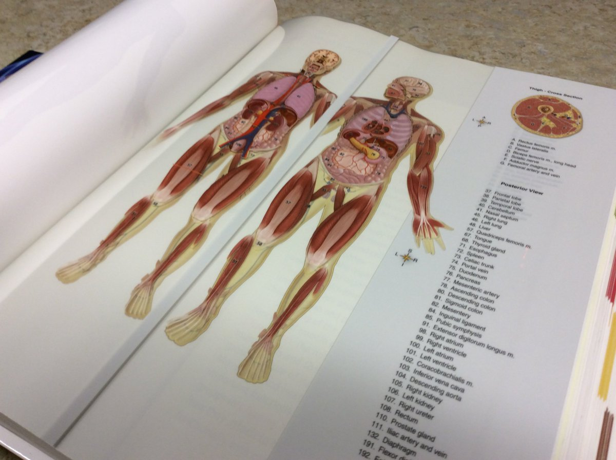 Umn Libraries On Twitter Need To Brush Up On Your Anatomy This