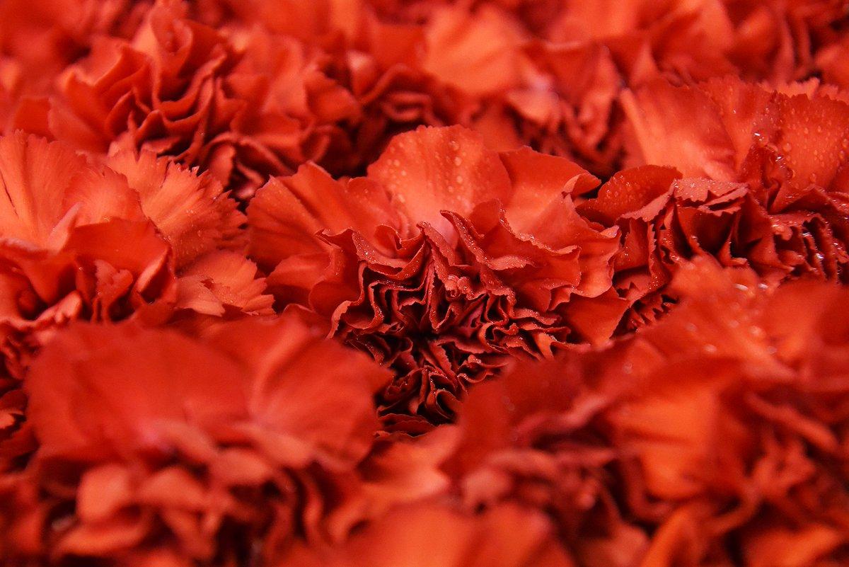 Erica Miller On Twitter Florist Designer Sue Garrett Creates