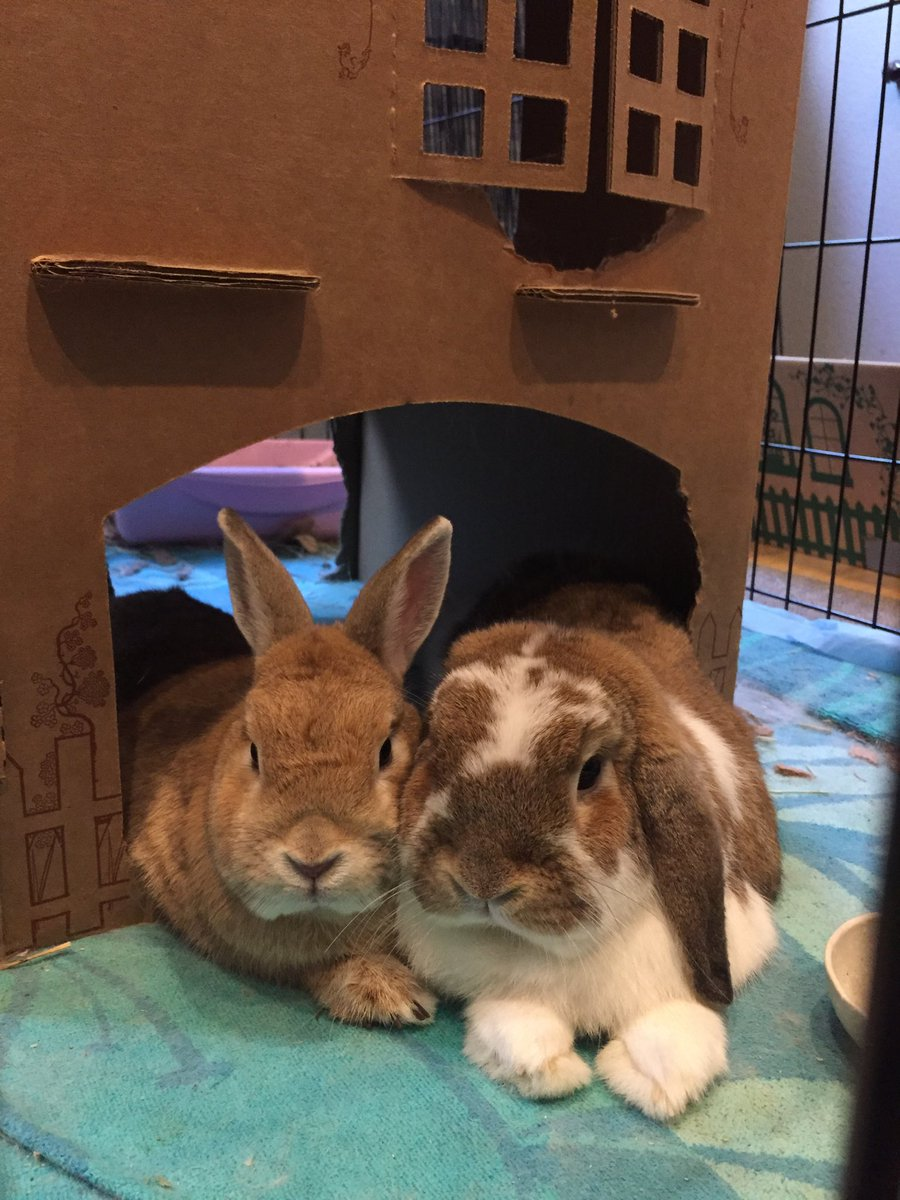 Sunday Bunny Blogging >> Mr Halander On Twitter Thursday Night Bunny Blogging Enjoying The