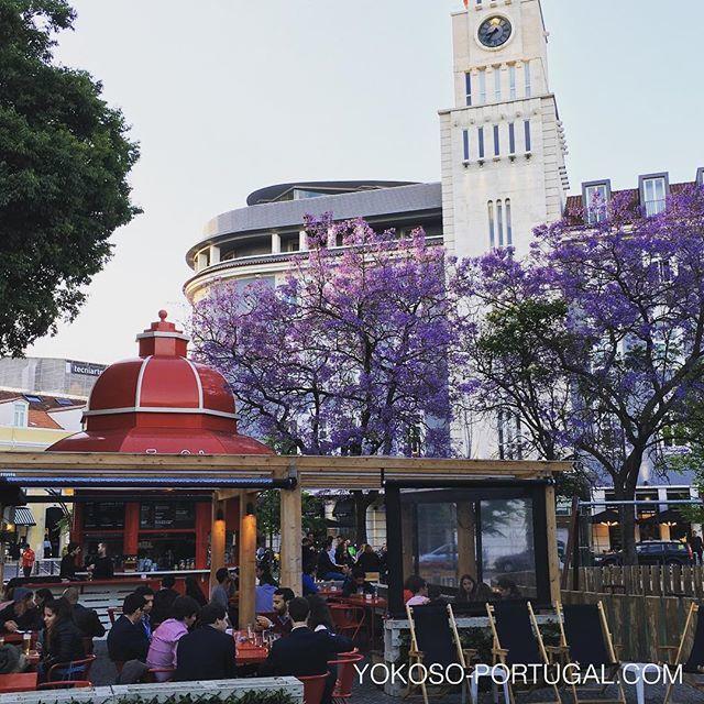 test ツイッターメディア - リベイラ市場の隣、ドン・ルイス公園のジャカランダ。 #ジャカランダ #リスボン #ポルトガル https://t.co/GBK3mcqO2S