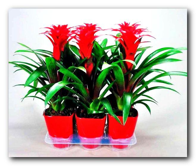 вам показать фото комнатных растений на букву ф нравиться наслаждаться