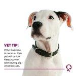 Image for the Tweet beginning: Vet tip: If the owner
