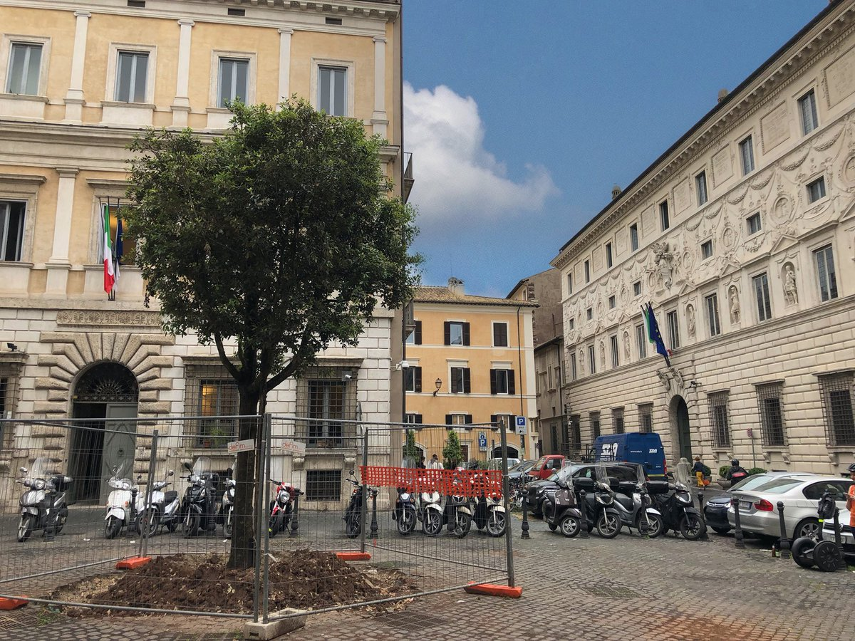 Roma news: in piazza della Quercia è stato piantato un LECCIO! Qualcuno sa dirmi il perché? Cambiamo il nome in piazza Leccio? @clapas66 @MercurioPsi @TrastevereRM @PasqualeTotaro @caputmundiHeidi @flaucy65 @Mustapha1508 @romewise @poggiamorella60 @sfnnicita @archivetro