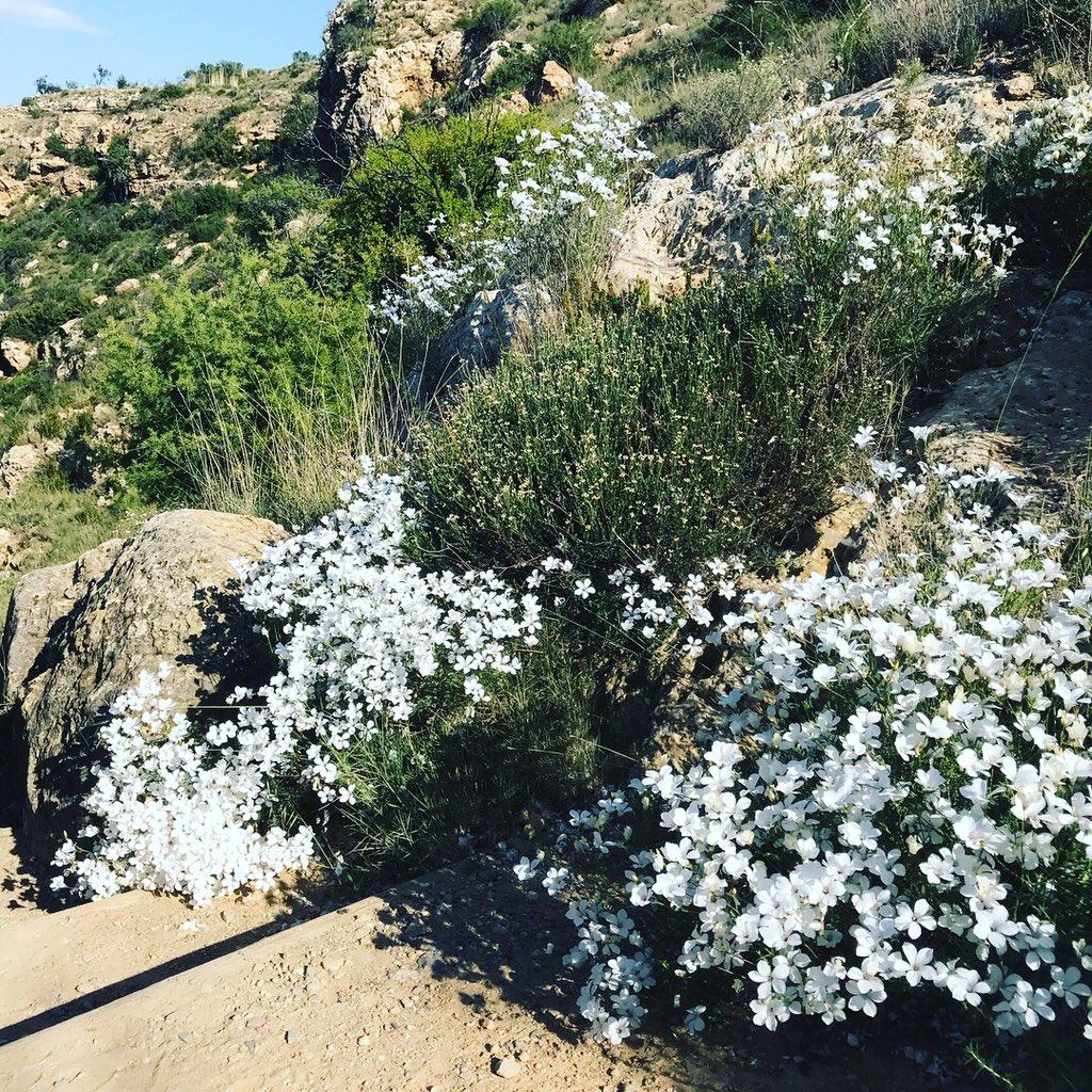 🌿🌿🌿💧 #chelvaturismo #chelva #rutadelagua #pueblitobueno #altoturia #laserrania #naturaleza @c_valenciana @valenciaturisme @valenciabonita_ @VISITaltoturia @