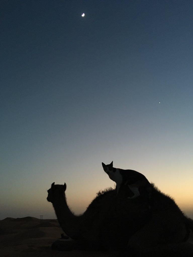 三日月とネコとラクダと。